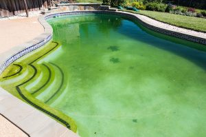 How to remove green algae from your pool